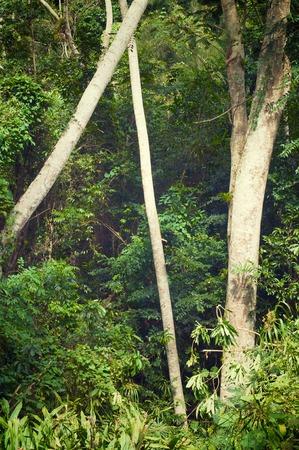 caribe: Forest in Escambray Mounatins, Villa Clara Province, Cuba. Stock Photo