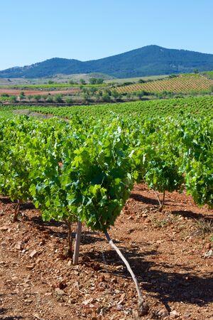 zaragoza: Vineyard in Paniza, Zaragoza province, Aragon, Spain Stock Photo
