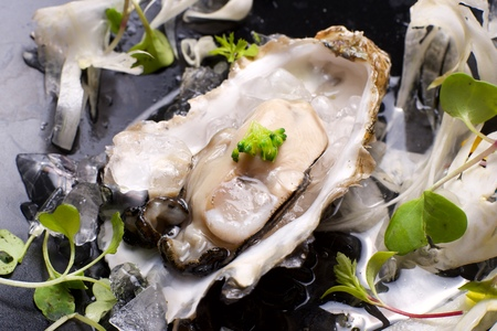 seafood platter: Oyster on the half shell with fennel salad and seaweed. Stock Photo