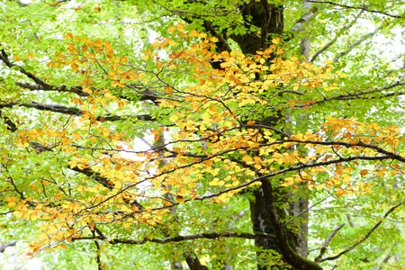 ordesa: Autumn in Ordesa National Park, Pyrenees, Huesca, Aragon, Spain.