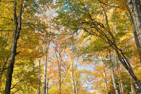 navarra: Autumnal forest in Irati Forest, Pyrenees, Navarra, Spain. Stock Photo