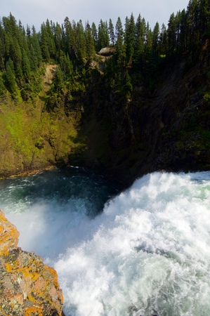 lower yellowstone falls: Lower Falls of the Yellowstone National Park.
