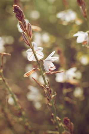Wild flower close up in Zaragoza Province, Aragon, Spain. Stock Photo