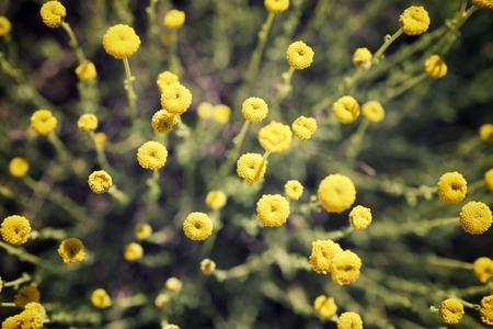 Wild flower close up in Spain.