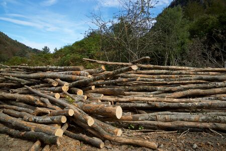 Forestry work in Pyrenees, France.