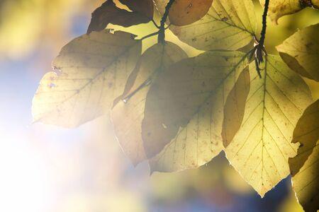 Detalle de hojas en Pirineos, Huesca, Aragón, España.