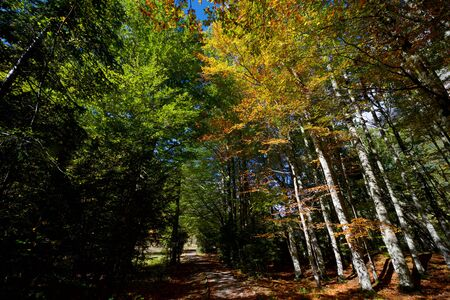 Forest in Ordesa National Park, Pyrenees in Huesca Province, Aragon, Spain.