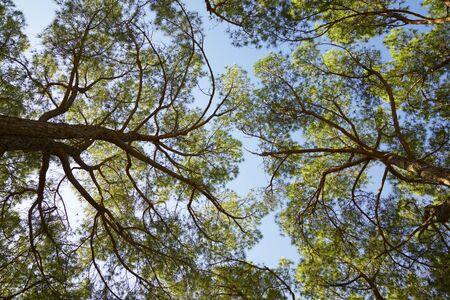 Trees in a park in Zaragoza city, Spain.