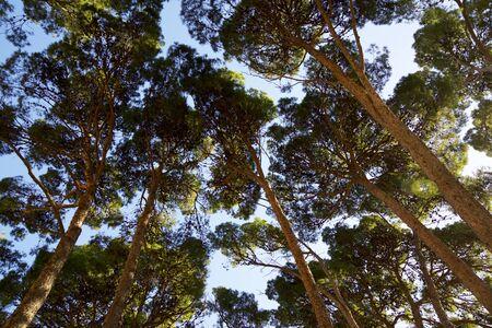 Trees in a park in Zaragoza city, Spain. Foto de archivo