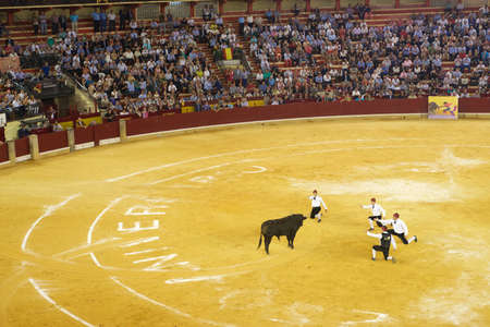 Zaragoza, Spain - October 8, 2014: Portuguese bullfighters kneeling in front of a bull. Banque d'images - 150388668
