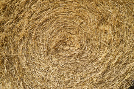 Straw bale close up in Zaragoza Province, Aragon in Spain.
