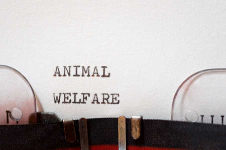 Animal welfare phrase written with a typewriter. Banque d'images