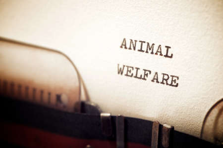Animal welfare phrase written with a typewriter.