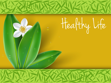 green tea leaf: Healthy lifestyle with jasmine flowers background
