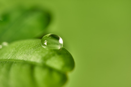 Fresh green leaf with dew drops close up background