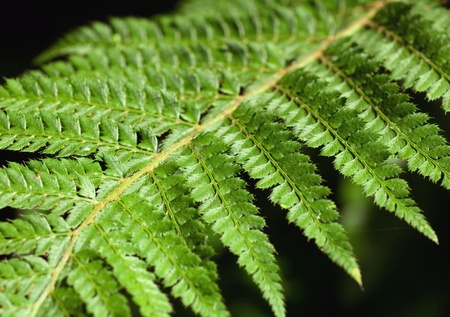 Beautyfull fern leaf in wild conditions, extreme clouse-up