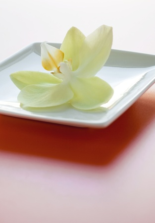 Spa decoration flower with sweet smell on ceramic square plate photo