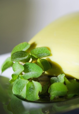 Spa decoration plants with water drops and yelow towel near by. Stock Photo