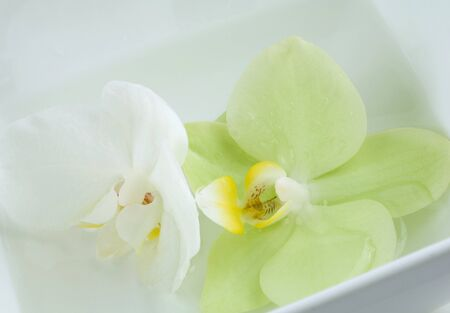 Orchid flower in dish of water, extreme close-up Stock Photo