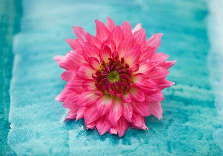 Fake rose paper flower on blue carpet, beautyfull  Stock Photo
