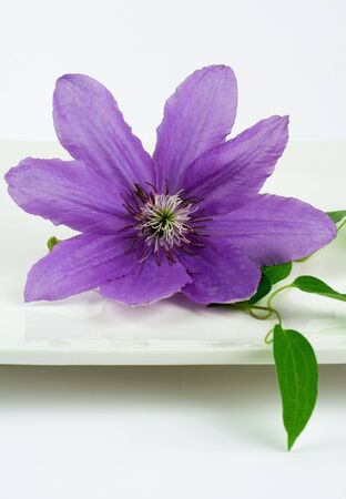 Purple decorative flower on square white plate, extreme close-up