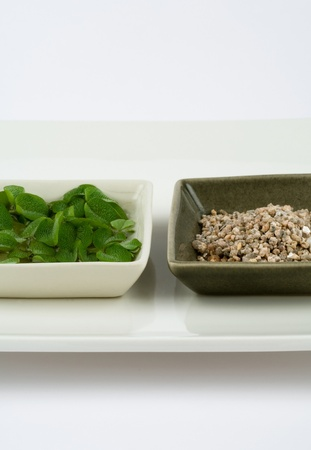 Decorative plants and fake sand on square dishes