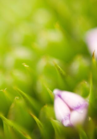 A lonely flower with beautyfull warm colours sorounded by grass Stock Photo