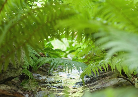 Small river in the rainforest with vegetal life near by