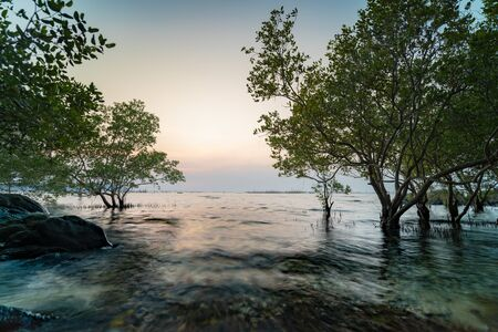 HDR Landscape of Sunset. mangrove tree and stone was hit by smooth waves Foto de archivo - 133536535
