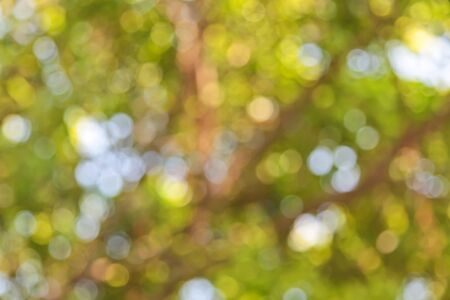 background the nature: Bokeh green