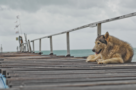lies down: dog lies down. Stock Photo