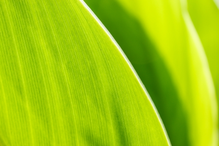 Green leaves Stock Photo - 13854056