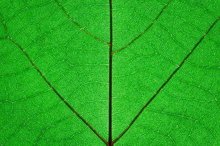 Green leaf surface texture macro closeup photo Stock Photo - 18316427