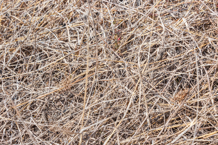 Close-up image of beautiful dry grass texture photo
