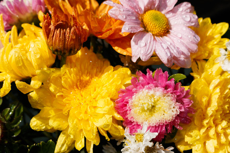 beautiful bouquet of bright flowers isolated on black
