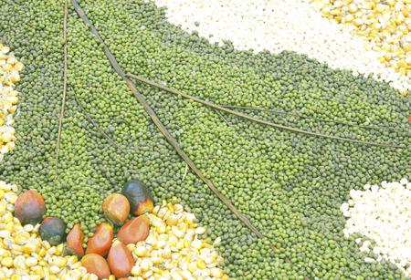 green beans: Jud�as verdes, las legumbres