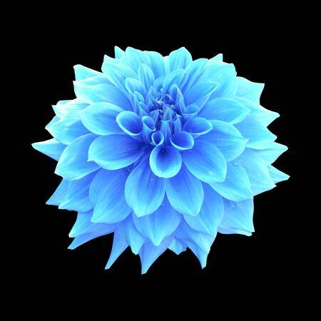 Fiore di dalia blu isolato su sfondo nero