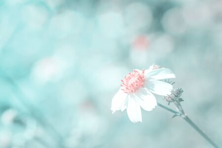 The White flower and grass in soft color style. Nature background.