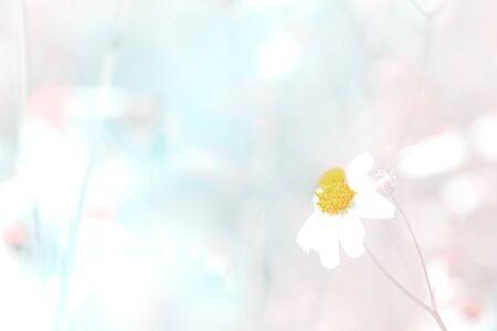 The White flowering grass,vintage style  tone as background.  Reklamní fotografie
