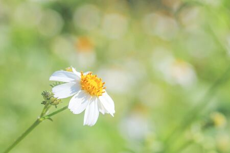The White flowers on a bright morning. Green nature background.  Reklamní fotografie