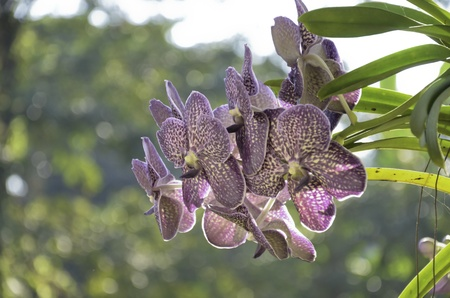 knowlage: Orchids in the afternoon