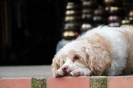 lay down: stray dog lay down