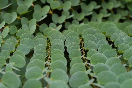 field depth: Green Leaves Background with Shallow Depth Of Field Stock Photo