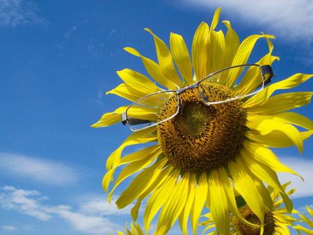 Glasses Sunflower photo