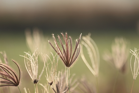 limp: Grass in the wind