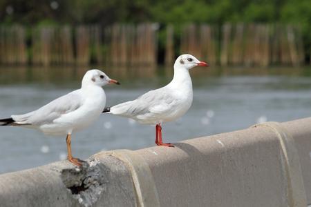 navigational light: seagull Stock Photo