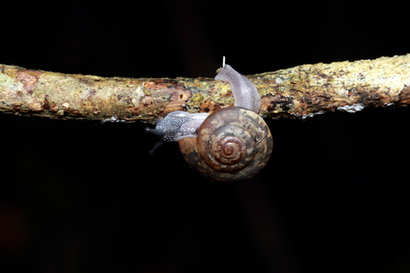 land shell: snail Stock Photo