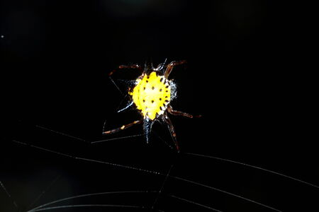 Spider in the forest photo