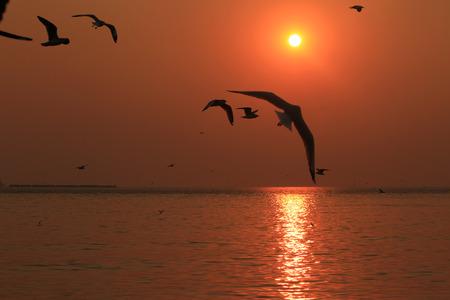 Vogel Silhouette Abend Sonnenuntergang