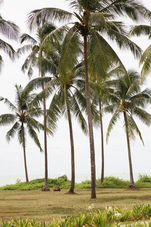 Coconut plantation by the sea Stock Photo